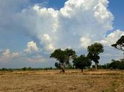 cartolina dall'Isaan campi riso come fotografa...