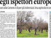 Xylella, tour secret degli ispettori europei. Sospesa agricola