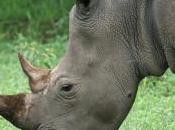 Migliaia sequestri decine arresti contro commercio illegale specie protette