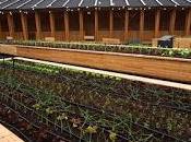 """MILANO. mensa vorrei"""" mense orti, padiglione Slow Food Expo."""