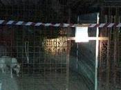 Combattimenti clandestini cani: denunce Napoli