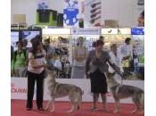 Esposizione Mondiale Canina Milano 2015