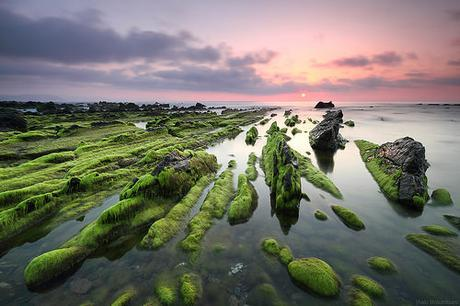 GREEN CHAOS by Obikani, on Flickr