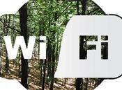 wi-fi uccidendo alberi: dimostra recente studio