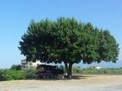 Vacanze Calabria sullo Ionio all'insegna relax divertimento famiglia