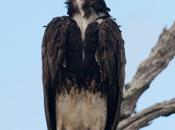 Avvoltoi nucleari