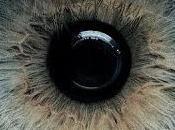 Guardi sempre specchio quello dell'anima