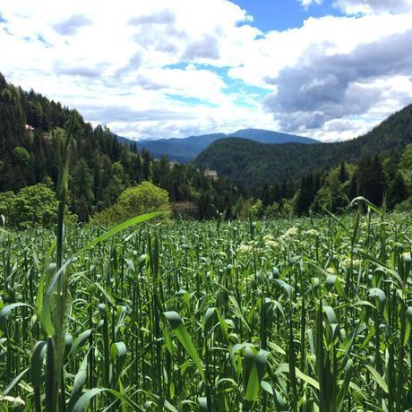 Alto Adige: andar per masi in Val d'Ultimo e Val di Non