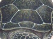 Civette con paesaggio innevato sassi dipinti 3 d paperblog for Sassi per tartarughe