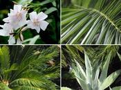 Scoprire flora mediterranea….