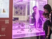 MEG, prima serra indoor automatizzata