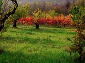 L'autunno seconda primavera, quando ogni foglia fiore