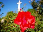 Rosa-Croce Egregori