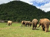 Elephant Nature Park, giusta scelta vedere elefanti Thailandia