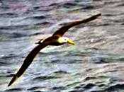 spirito dell'albatros