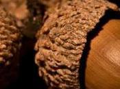 Pan'ispeli, l'antico pane ghiande