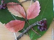 Quadro foglie