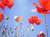 Umile fiore campo....