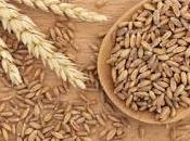 farro, cereale meno calorico
