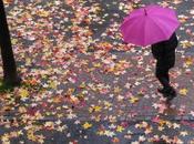 """Sfida fotografica colori d'autunno"""": vincitore nuovo tema"""