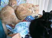 Storie gatti crostate………….