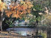 Parco Sempione l'autunno