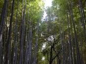 Giappone: dieci luoghi emozionanti