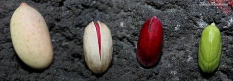 L'arte nella trasformazione: il pistacchio