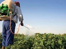 Pesticidi: insetti siamo
