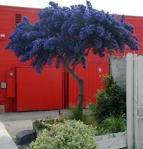 Alberi per piccoli giardini su houzz paperblog for Alberelli da esterno