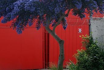 Alberi per piccoli giardini su houzz paperblog - Piccoli alberi da giardino ...