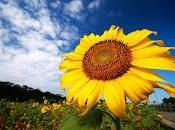 Here comes sun: scoperto meccanismo cellulare aiuta piante competere luce