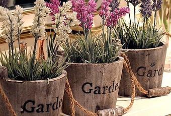 Le 10 piante positive da tenere in casa paperblog - Piante da tenere in casa ...