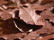 Foglie cioccolato