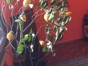 albero limoni uncinetto