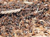 mondo delle formiche L'eusocialità