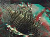 Undersea fondo mare) Anaglifo