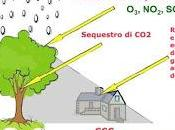 valore alberi aree verdi
