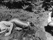 Fraser Debolt .Folk, Acid genialità Canada inizio anni settanta.
