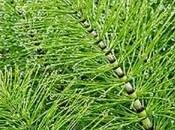Difesa naturale dell'orto: l'equiseto