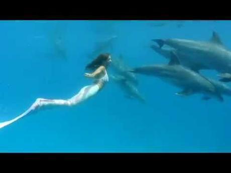 nuotare con i delfini il sogno e la dura realt