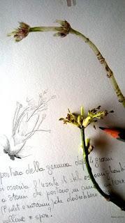 Sketching di primavera