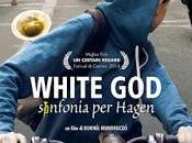 White Sinfonia Hagen