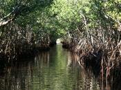 costa occidentale della Florida: spiagge sabbia fine Golfo Messico