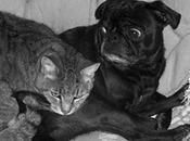 gatto salvò cane