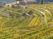 L'Amarone, vino natali bizzarri