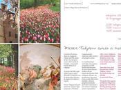 Castello Pralormo MESSER TULIPANO Spettacolare fioritura