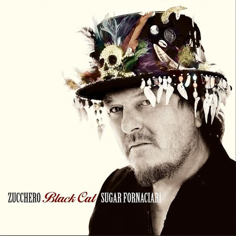 zucchero-black-cat