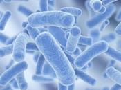 microbioma intestinale: salute malattia cane gatto passano qui!