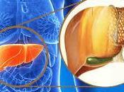 fegato grasso, patologia crescita